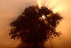 635617799642801926-reader-thiel-foggy-tree