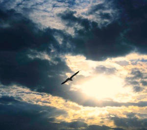 bird_flying_with_dark_clouds_background_1800x16001