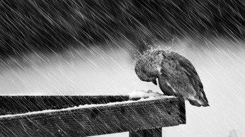 black-and-white-rain-birds